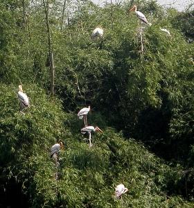 Vedathangal bird sanctuary